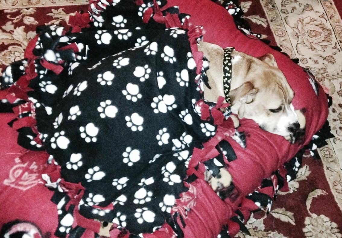 Taco_Bed